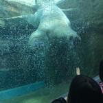 動物園が苦手な親と 子どもの夢