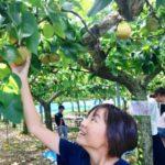 hug組、地元で梨の木オーナーを楽しむ