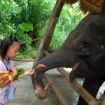 夏休み~バリ島で象