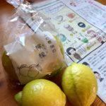まきっぺと山の根畑の檸檬